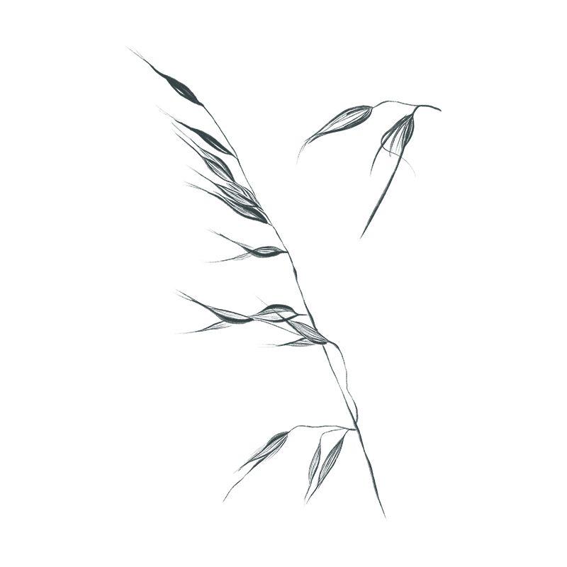 loja_online_site_arte_Botanical_Poster_Plants_03