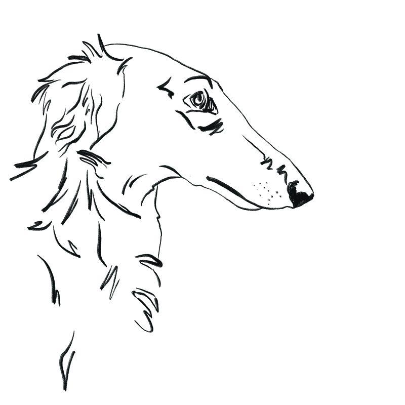 ilustração cão bolzoi desenho linha